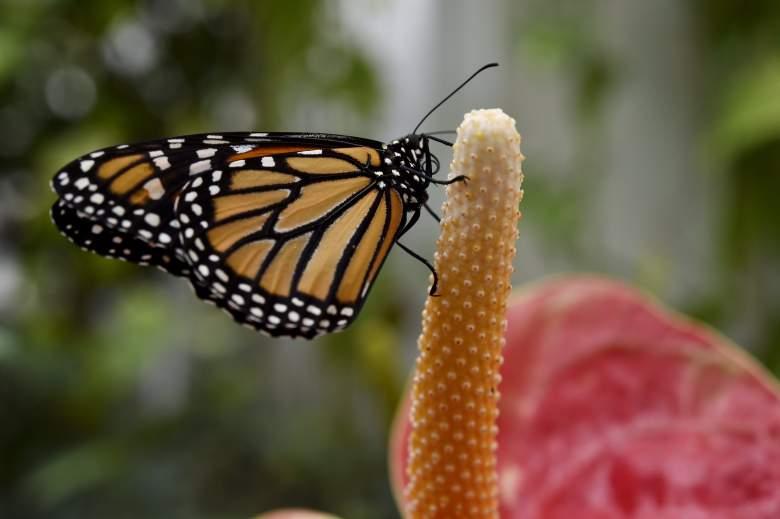 mariposas google doodle