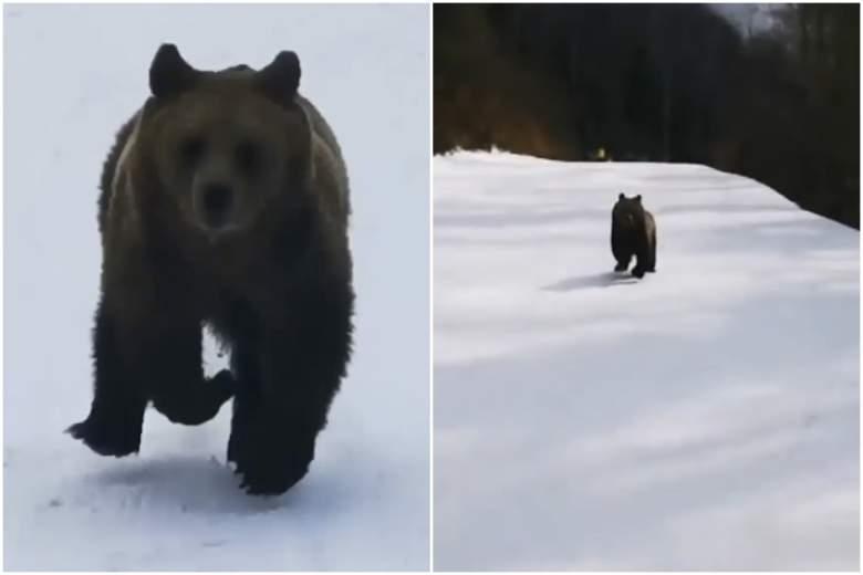 oso-esquiador