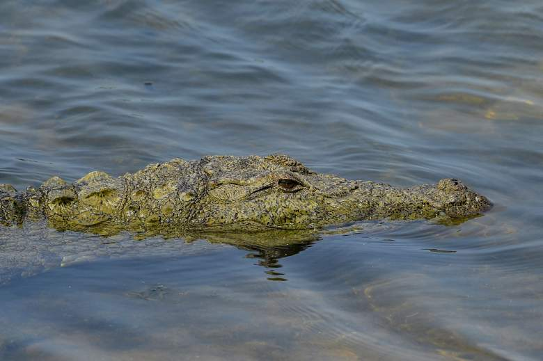 En esta fotografía tomada el 2 de abril de 2021, un cocodrilo toma el sol en la orilla de un río en el Parque Nacional Yala, a unos 250 kms al suroeste de Colombo.